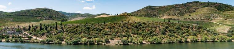 Point of View tiró de viñedos colgantes en el valle del Duero Imagen de archivo libre de regalías