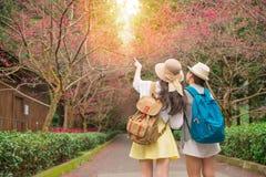 Pointage d'amis de Sakura de floraison Image stock