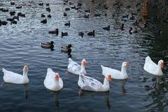 Pointe de flèche de lac photographie stock libre de droits