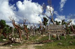 Pointe de la Grande destroyed after the passage of cyclone Hugo. In Guadeloupe in 1989. French Antilles Stock Image