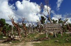Pointe de la Grandioso destruído após a passagem do ciclone Hugo Imagem de Stock