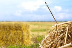 Pointeau dans un haystack images libres de droits