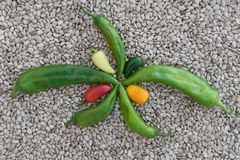 A 5 pointed Chile holiday star on a bed of Pinto beans. stock photo