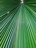 Pointed leaf Royalty Free Stock Photo
