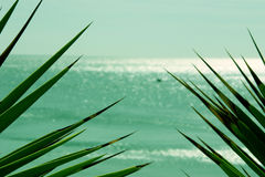 Pointed Leaves and Sea. Image with pointed leaves in the foreground and the sea in the background on a bright and sunny day Stock Images