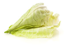 Pointed or sweetheart cabbage. A pointed cabbage, also called sweetheart cabbage,  on white Stock Photos