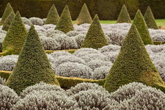Pointed Topiary Stock Images