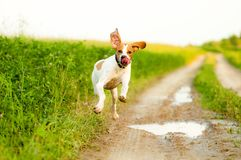Pointer Royalty Free Stock Images