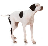 pointer photographie stock
