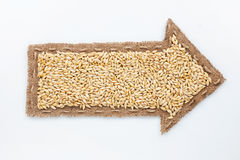 Pointer with barley grains Stock Photography