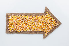 Pointer with corn  grains Stock Image