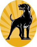 Pointer dog with sunburst. Illustration of a Pointer dog with sunburst in background done in retro style set inside an oval stock illustration