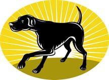 Pointer dog with sunburst Royalty Free Stock Photo