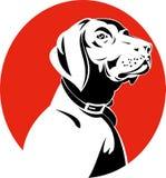 Pointer hunting dog Royalty Free Stock Photo
