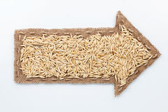 Pointer with oat  grains Royalty Free Stock Image