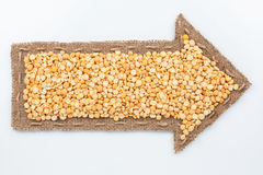 Pointer with peas grains Stock Photography