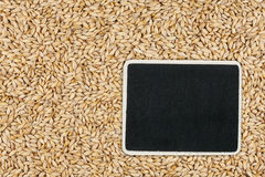 Pointer, the price tag lies on barley. With space for your text Stock Photography