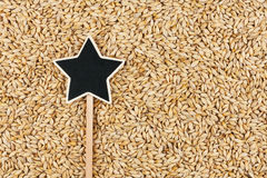 Pointer, the sign lies on  barley. With space for your text Stock Photos