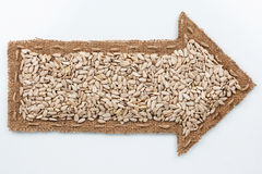 Pointer with sunflower seeds Royalty Free Stock Photo