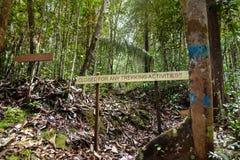 Pointer w Bako parku narodowym zdjęcie stock