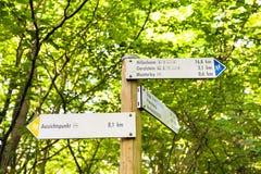 Pointery w lesie na Gerolsteiner górze Obrazy Stock