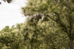 Pointillismusbäume stockbilder