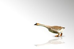 Pointing goose Royalty Free Stock Image