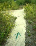 Pointing Path. A green arrow painted on a sidewalk leading through green and yellow weeds Stock Photo