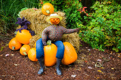 Pointing Scarecrow Sitting on a Pumpkin Royalty Free Stock Photos