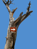 Pointing to the right. A sign to the right on a dead tree Royalty Free Stock Image