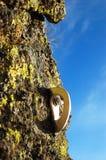 Points d'attache de roche Photographie stock libre de droits