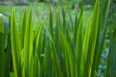 Points des lames vertes Photo stock