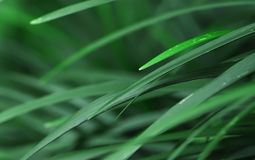 Pointy tropical leafs. With blur background royalty free stock photography