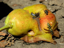 Poire et abeille Photos stock