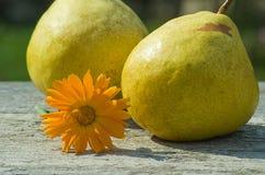 Poire et fleur jaunes Photographie stock libre de droits