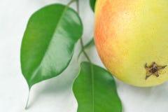 Poire organique mûre dans la branche jaune en pastel de couleurs rouges avec des feuilles de vert sur le tissu de toile blanc Sty photos libres de droits