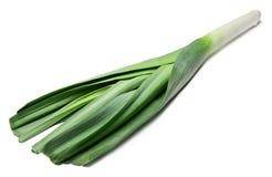Poireau vert frais sur le fond d'isolement blanc photo libre de droits