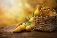 Poires d'automne images libres de droits