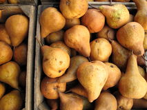 Poires organiques Photos stock