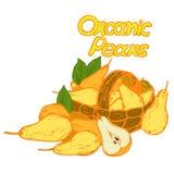 Poires organiques de logo illustration libre de droits