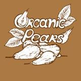 Poires organiques de logo illustration de vecteur