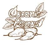Poires organiques de logo illustration stock