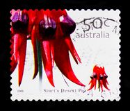 Pois de désert du ` s de Sturt, serie de Wildflowers, vers 2005 Images libres de droits