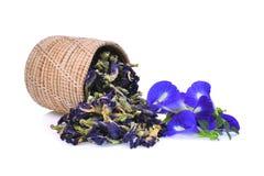 Pois de papillon frais et sec, pois bleu, ternatea de clitoria Photographie stock