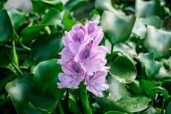 Pois ou bleu de papillon de fleur photos libres de droits