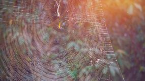 Spider on web, natural trap in forest. Poision spider on web, natural trap in forest Royalty Free Stock Image