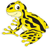 Poison-arrow frog Royalty Free Stock Photo