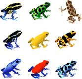 Poison Dart Frogs royalty free illustration