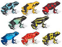Poison Dart Frogs. Illustrations of Poison Dart Frogs Stock Images