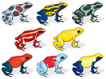 Poison Dart Frogs. Illustrations of Poison Dart Frogs Stock Photos